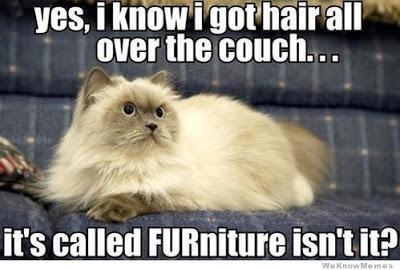funnycatfurniture