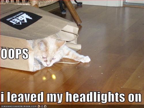 funnycatheadlights