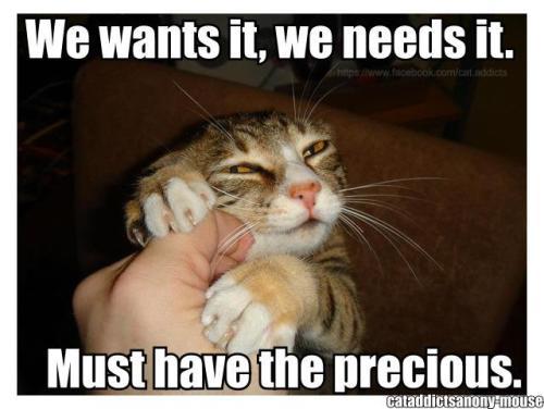 funnycatlol_cats_1