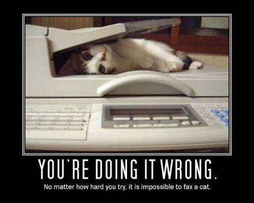funnycatyoure-doing-it-wrong