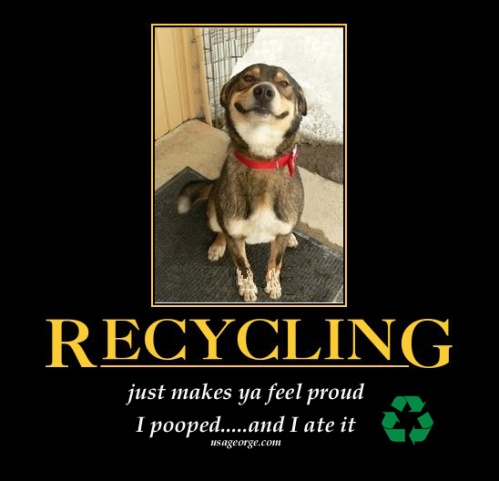 Recycling-Dog