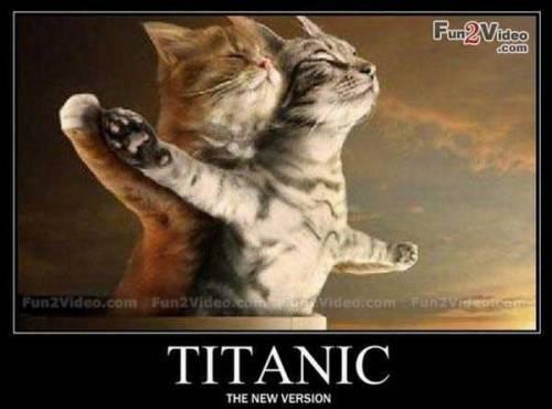 funny-animal-titanic