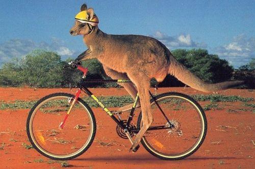 Funny-Australia-Home-Of-Kangaroos