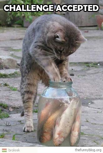 funny-cat-chasing-fish-in-jar-pot-challenge-accepted