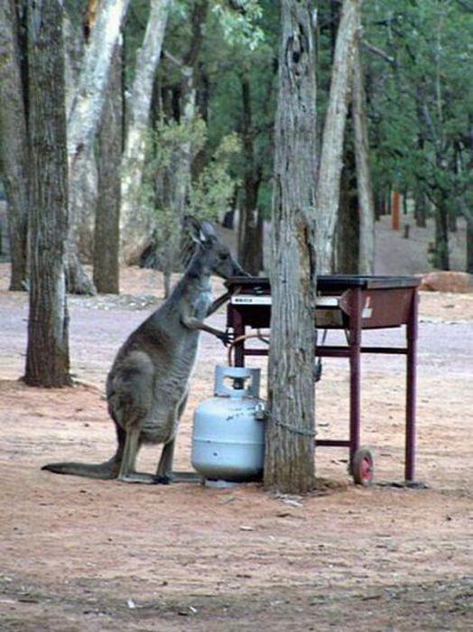 Funny-in-Australia-03