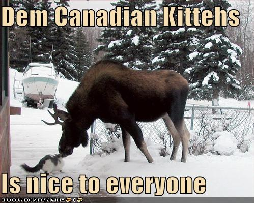 funny-pictures-canadian-cats-are-nice-to-everyone