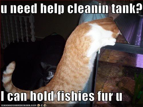 funny-pictures-cat-helps-clean-fish