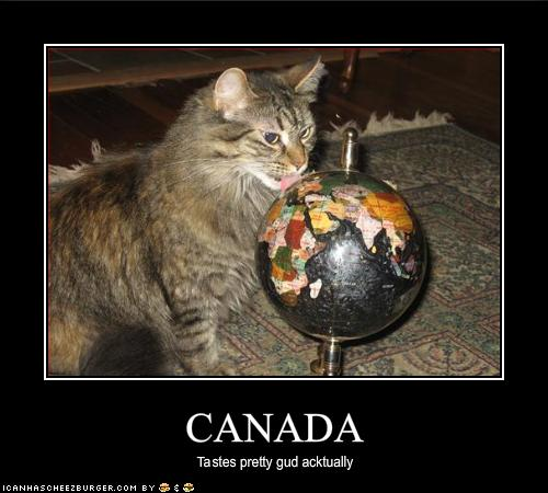 funny-pictures-cat-likes-how-canada-tastes