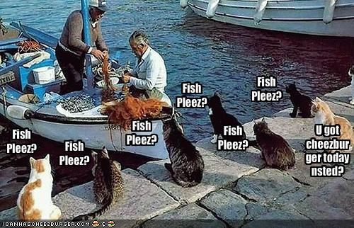 funny-pictures-cats-wait-by-fishing-boat