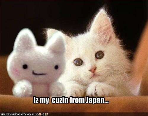 funny-pictures-kitten-has-a-japanese-cousin