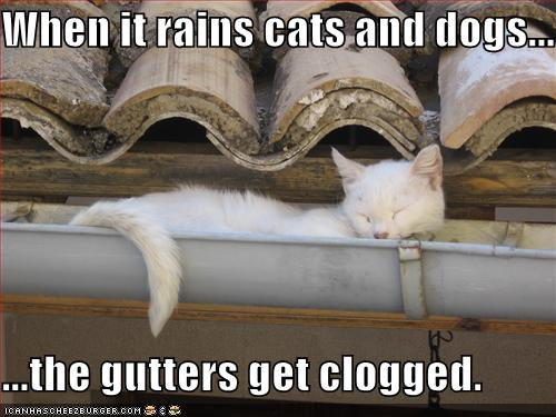 funny-pictures-the-gutters-are-clogged-with-cats