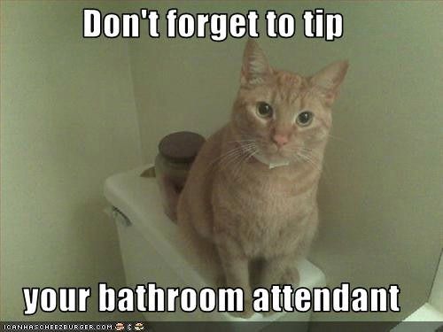 funny_cat_bathroom