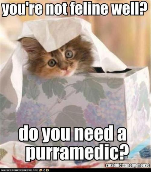 funnycatlol-cats-funny-sick-pictures