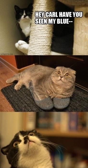 funnycatsblue