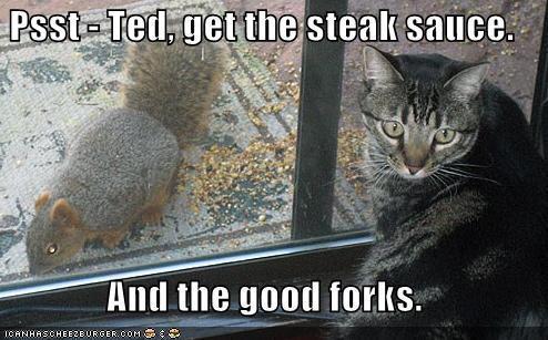 funnycatssteaksauce