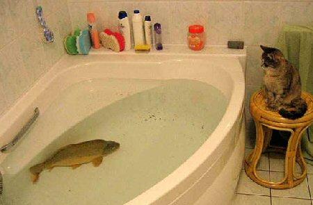fish_tub