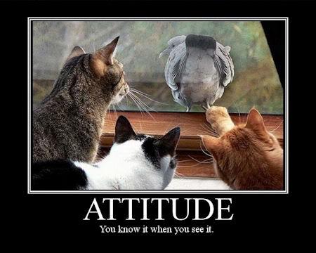 funny-attitude