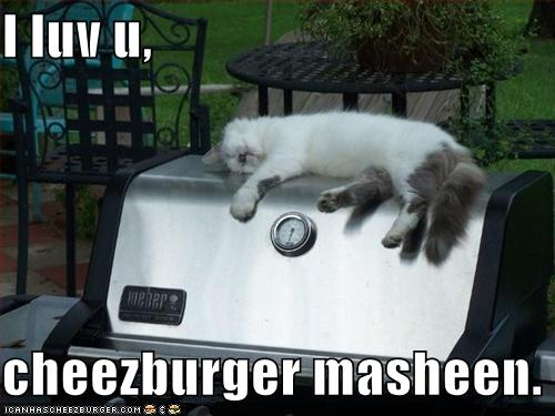 funny-pictures-kitten-loves-the-cheeseburger-machine