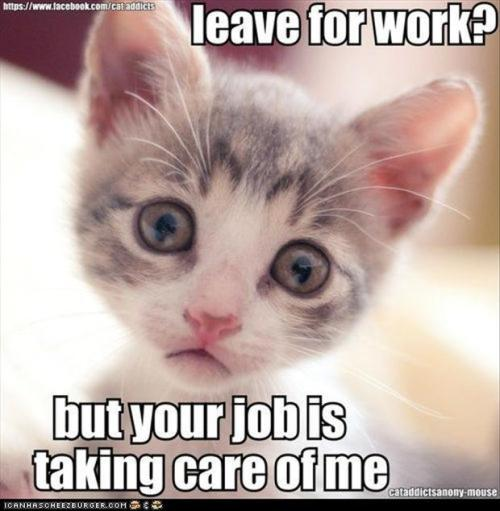 funnycats-work-kitten