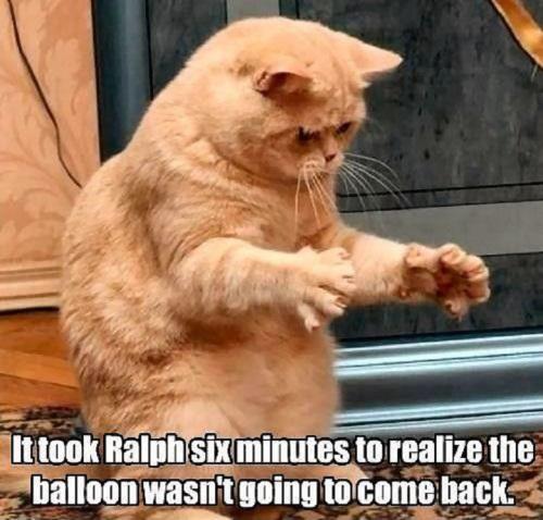 funnycatsballoon43
