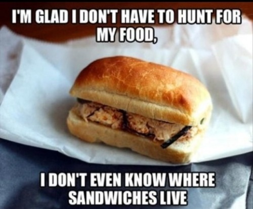 Funny-memes-hunt-for-my-food