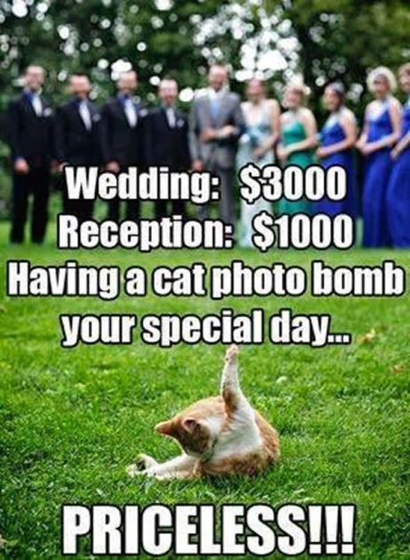 funny-having-a-cat-photo-bomb-your-special-day-is-priceless-01