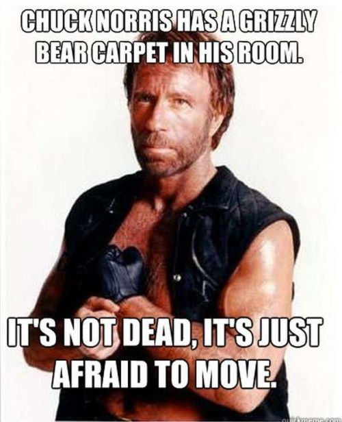 chuck-norris-grizzly-bear-carpet