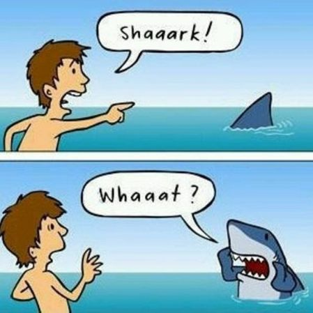 sharkwhat