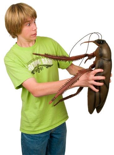 Ginat-Roach